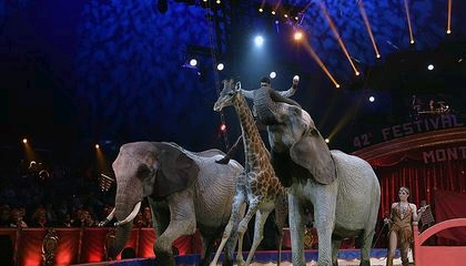 wild animals from circuses