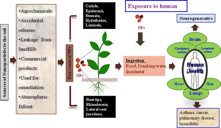 Exposure-to-human