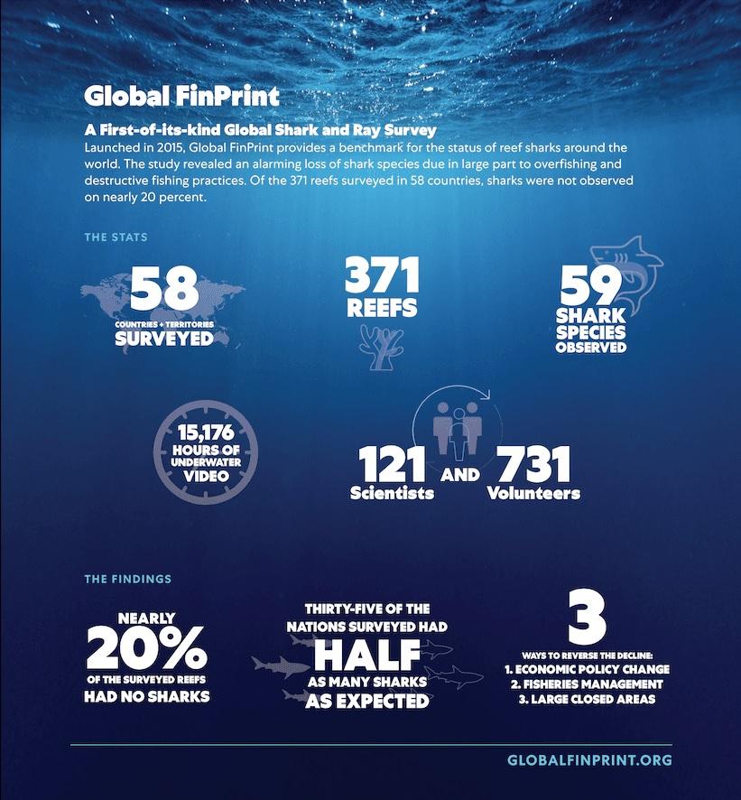Global-finprint