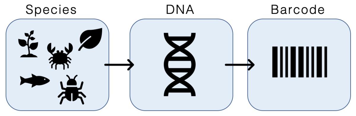 DNA-Barcoding