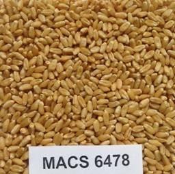 MACS-6478
