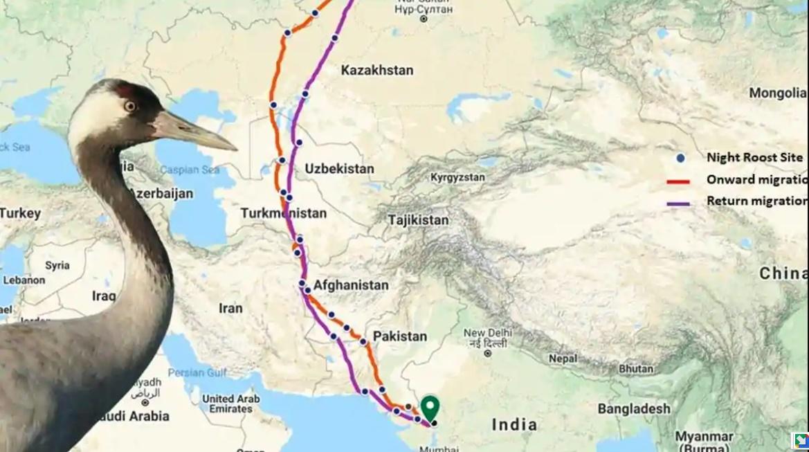 Crane-Migratory-Route
