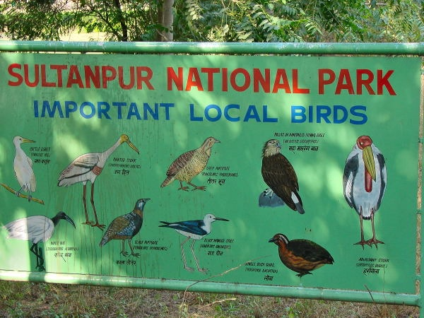 Sultanpur-National-Park