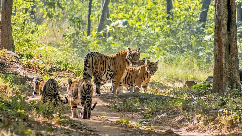 Satapuda-Tiger-Reserve