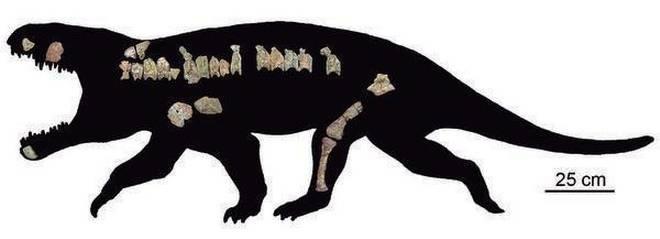 Bharitalasuchus-Tapani
