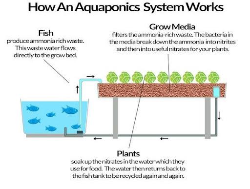 Aquaponics-System-Work