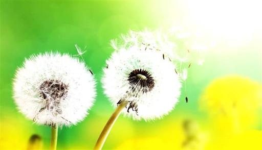 Pollen-Calendar